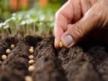 Semeando boas sementes